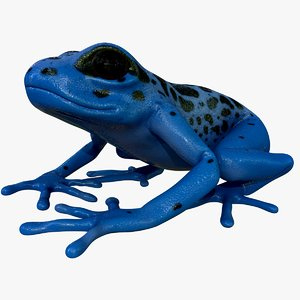 3D model realistic poison dart frog
