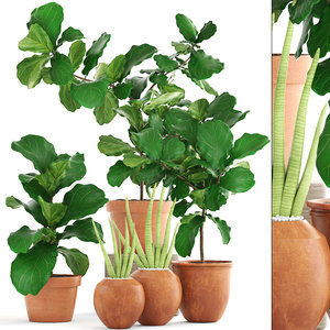 3D plant ficus trees model