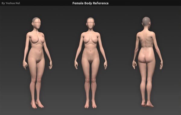 3d model of human body reference