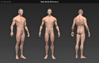 Human Male Body Reference
