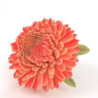 aster flower 3D