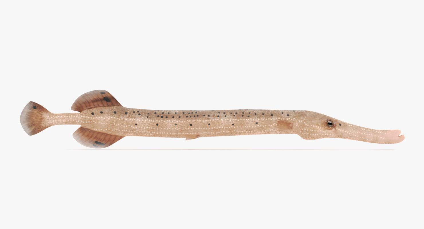 trumpetfish aulostomus maculatus 3D model