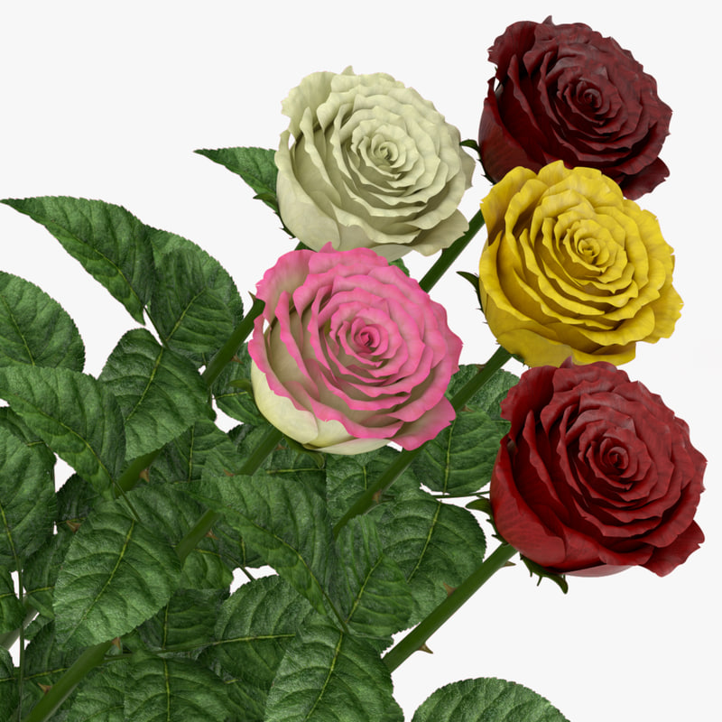 3D model rose middle open