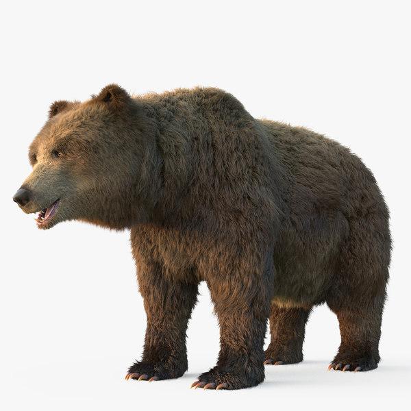 3D grizzly bear fur model