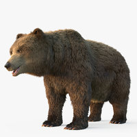 3D grizzly bear fur model
