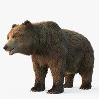Grizzly Bear Fur