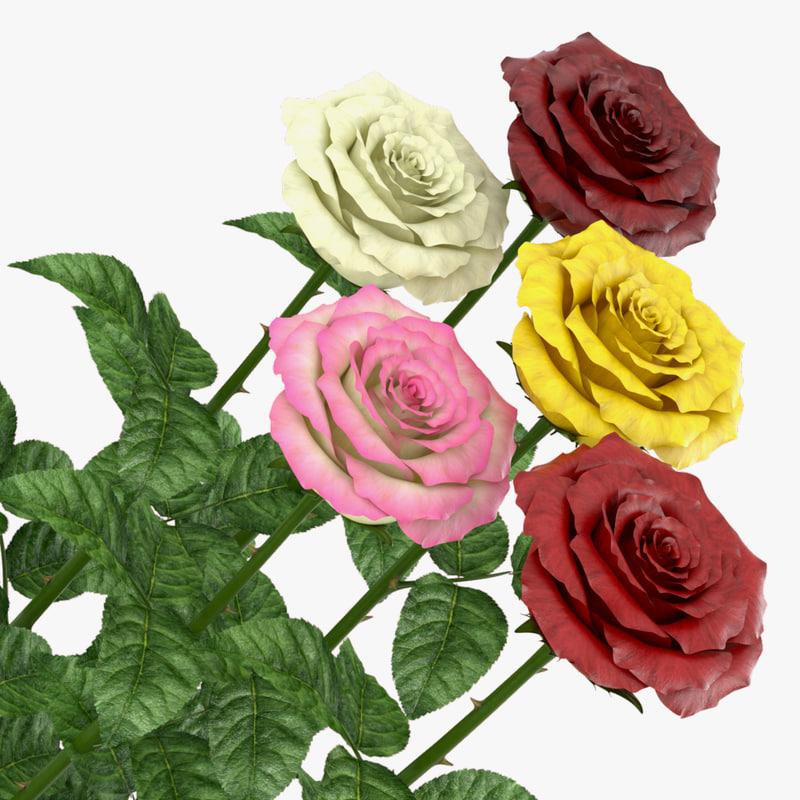 3D rose open