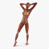 female muscular anatomy rigged 3D model