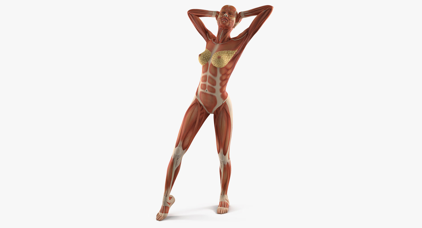 female muscular anatomy rigged 3D model