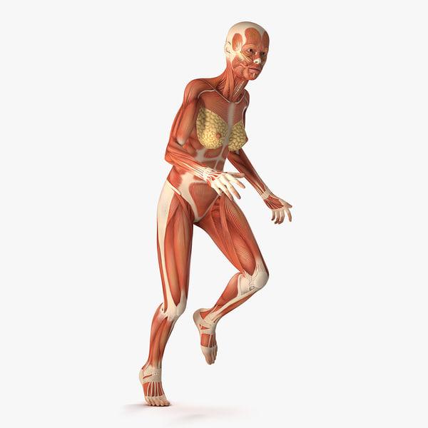 3D running woman muscular anatomy