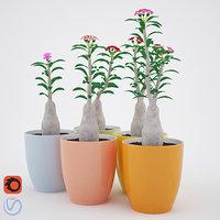 adenium plant 3D model