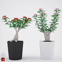 3D adenium plant house model