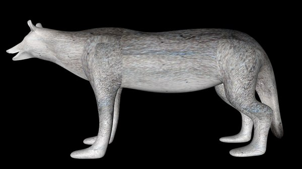 3D gray wolf