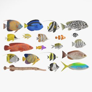 3D tropical fishes model