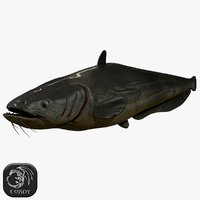 3D model ready catfish