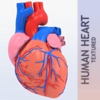 human heart 1 3D model
