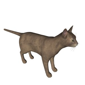 3D abyssinian cat