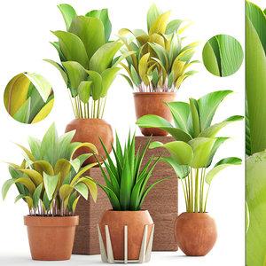 plants calathea lutea model