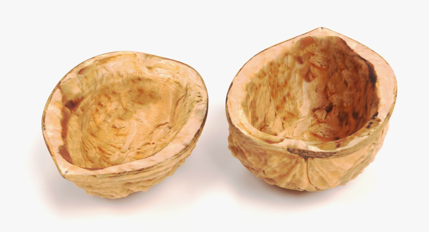 walnut shells 3D model