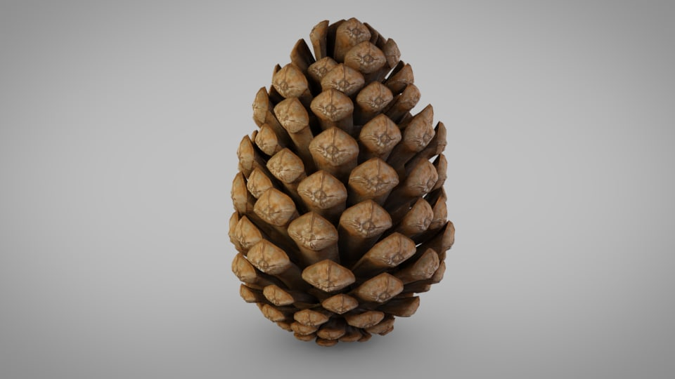 pine cone pinecone 3D model
