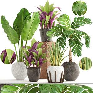 3D plants agave tropical