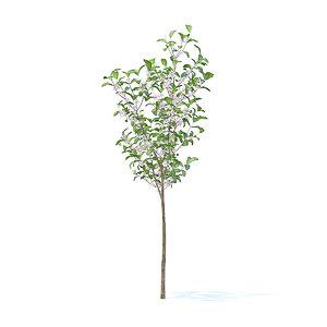 3D apple tree 2 7m