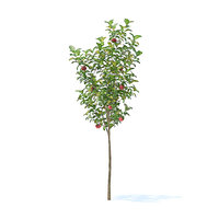 3D model apple tree