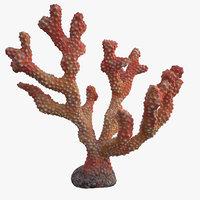 3D coral acropora v3 model