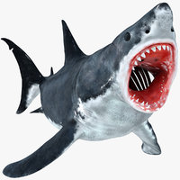 great white shark animation 3D model