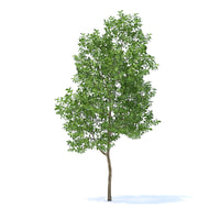apple tree 3 8m 3D model