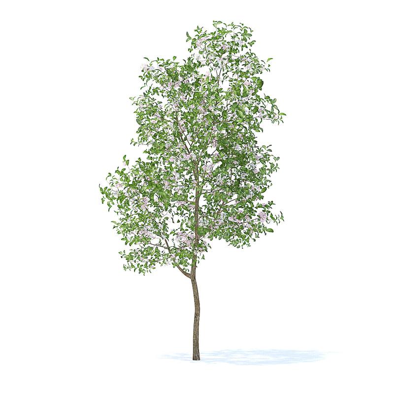 apple tree 3 8m 3D