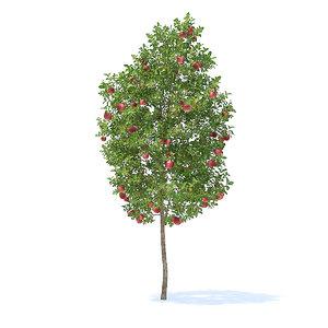 apple tree 3 8m 3D model