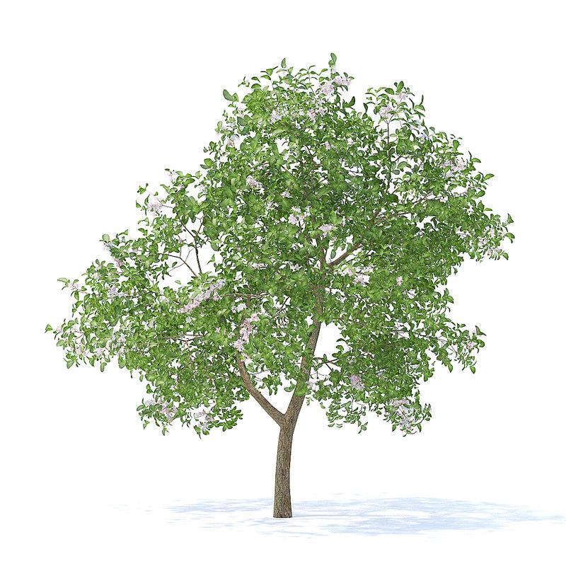 3D apple tree 3 7m