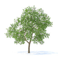 3D apple tree 3 7m