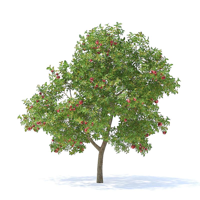 apple tree 3 7m 3D model