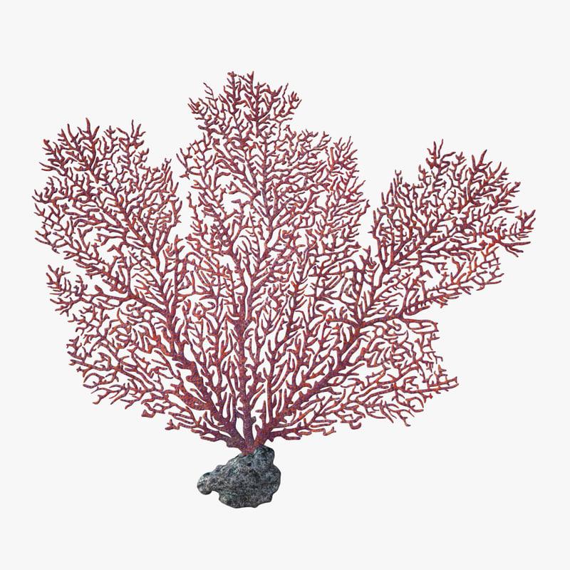 fan coral v2 3D model