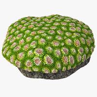 3D favia coral model