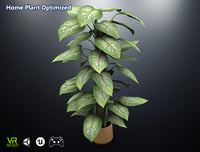 3D optimized home plant dieffenbachia model