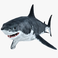 3D great white shark model