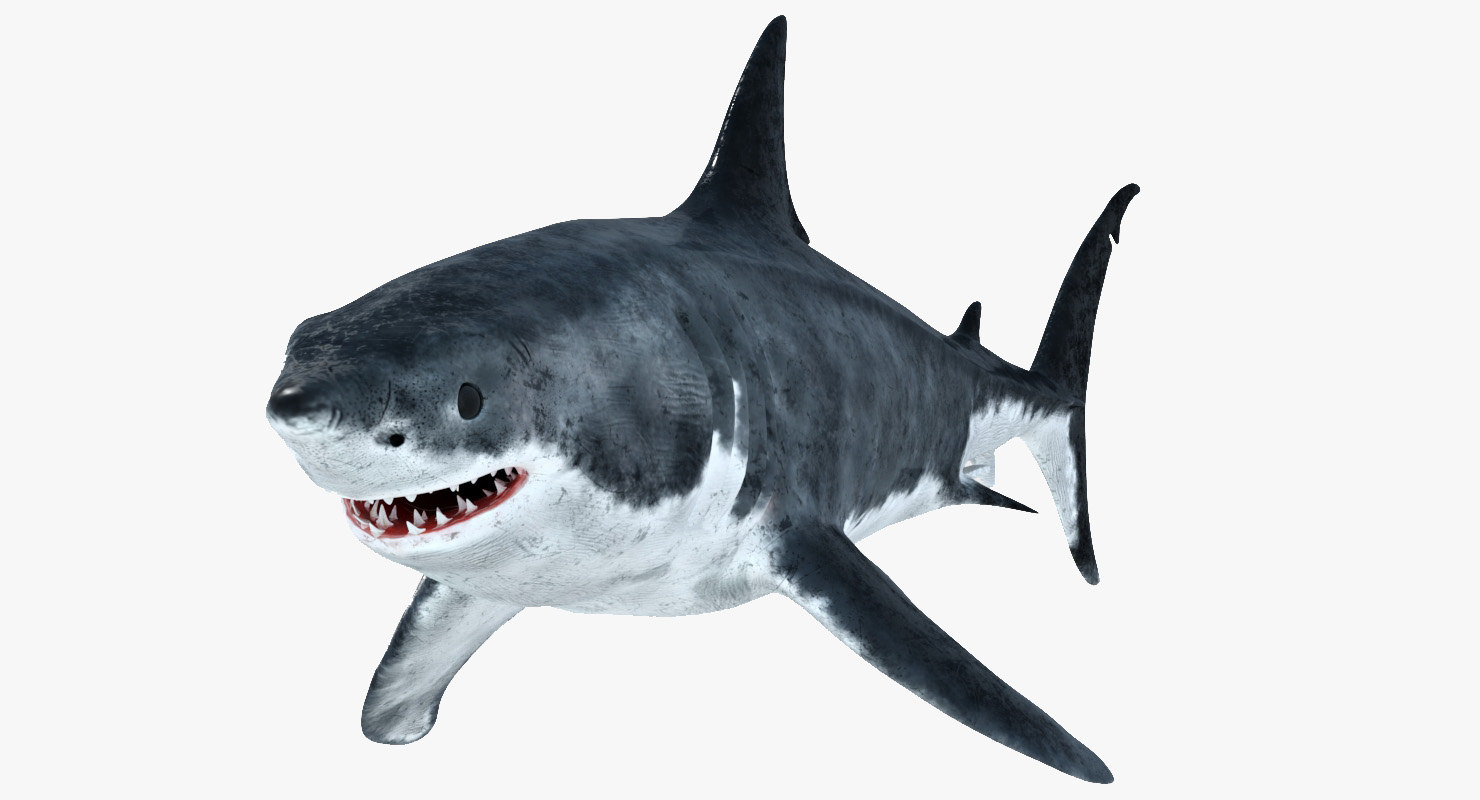 3D great white shark model