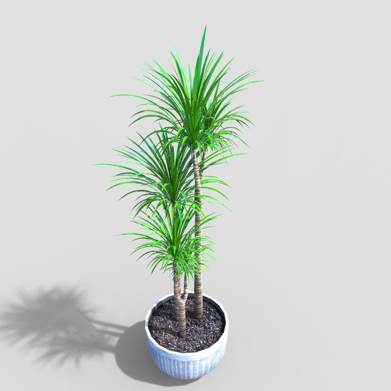 tropical plant 3d2 3D model
