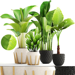 banana palm calathea 3D