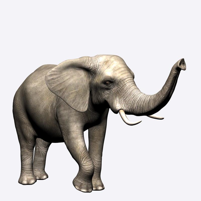 elephant model