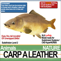 3D carp leather model