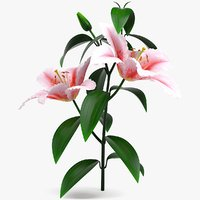 3D realistic pink lily flower model