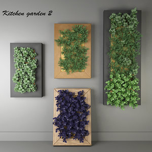 3D model decorative kitchen oregano plants