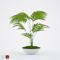howea 3D model