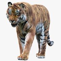 Tiger (Rigged Fur) 1