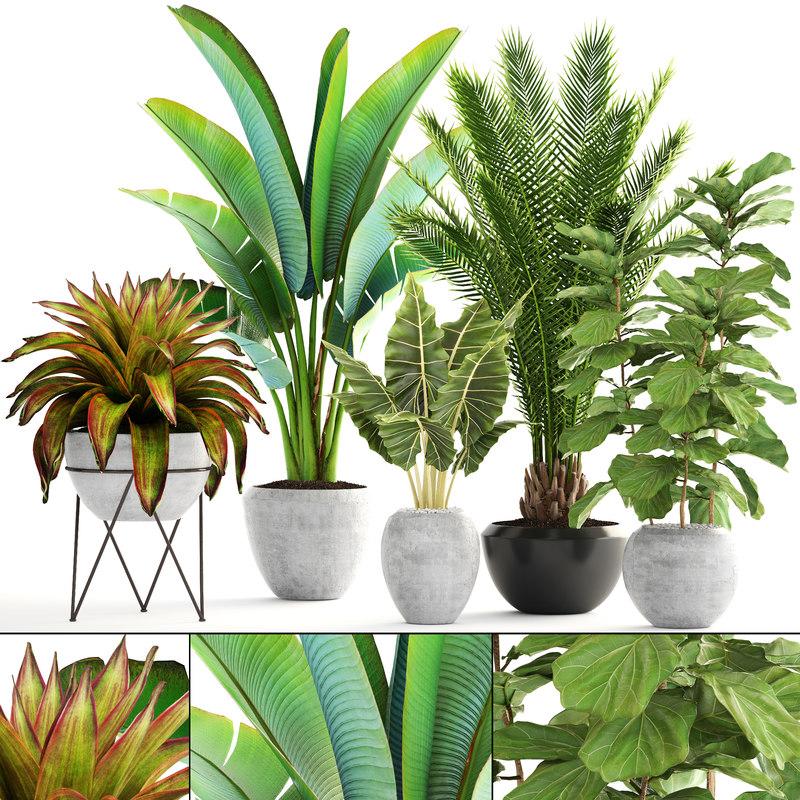 3D plants date palm model