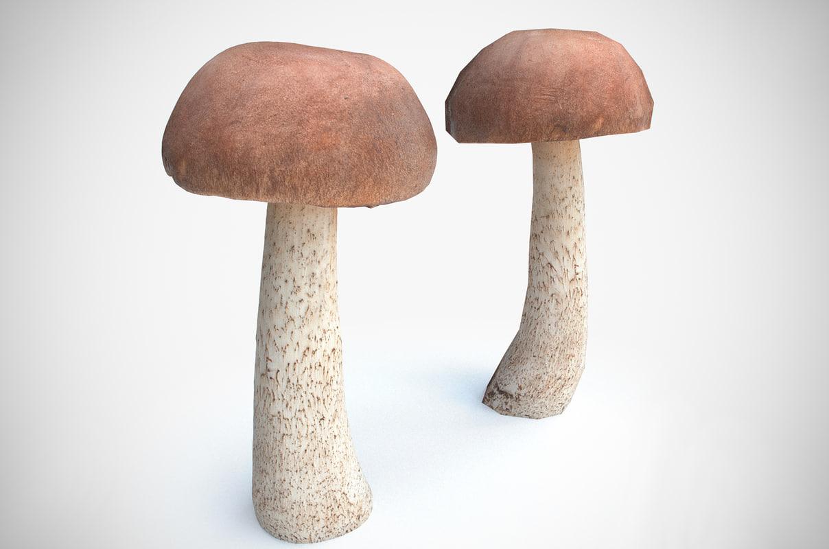 3D leccinum boletus mushroom model